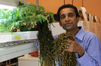 Prithiviraj holds a clump of brown seaweed,